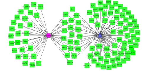 A network graph linking thalidomide to angiogenesis, from an I2E query of MEDLINE abstracts
